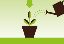 Plant directly into the potting mix and water thoroughly.